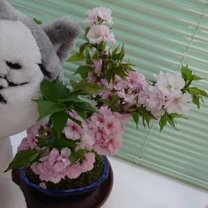 満開♪猫と桜の図
